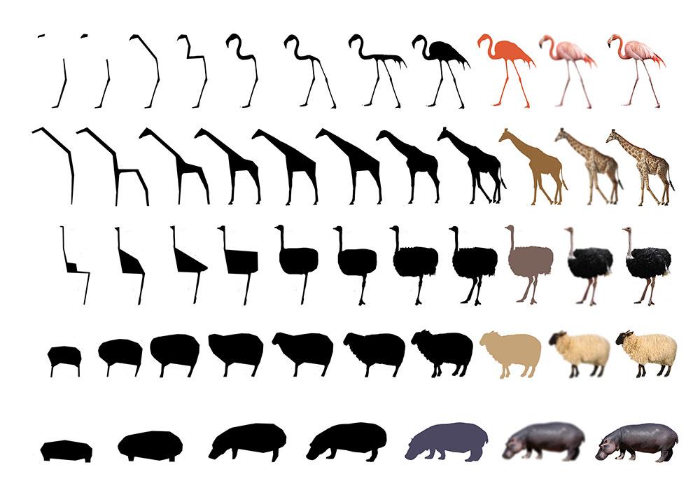 סקיצות בתהליך המחקר של מגדסי. עד לאיזו נקודה ניתן לפשט את צורת החיה מבלי שתאבד את זהותה לגמרי