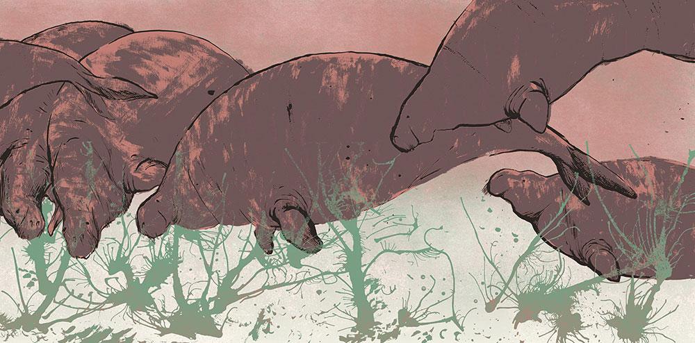 איור של פילי ים. על אף שמצליחים לעצור את הציד, פילי הים עדיין בסכנת הכחדה