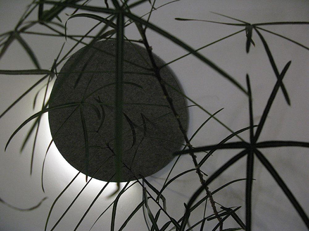 טל מור. עיגול תאורה על נוף במבוק