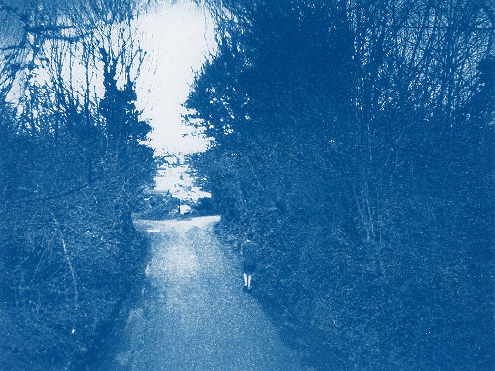 אורי גרשוני. דרך כפרית עם עצי שלכת משני צדדיה. תצלום ציאנוטייפ בגוון כחול
