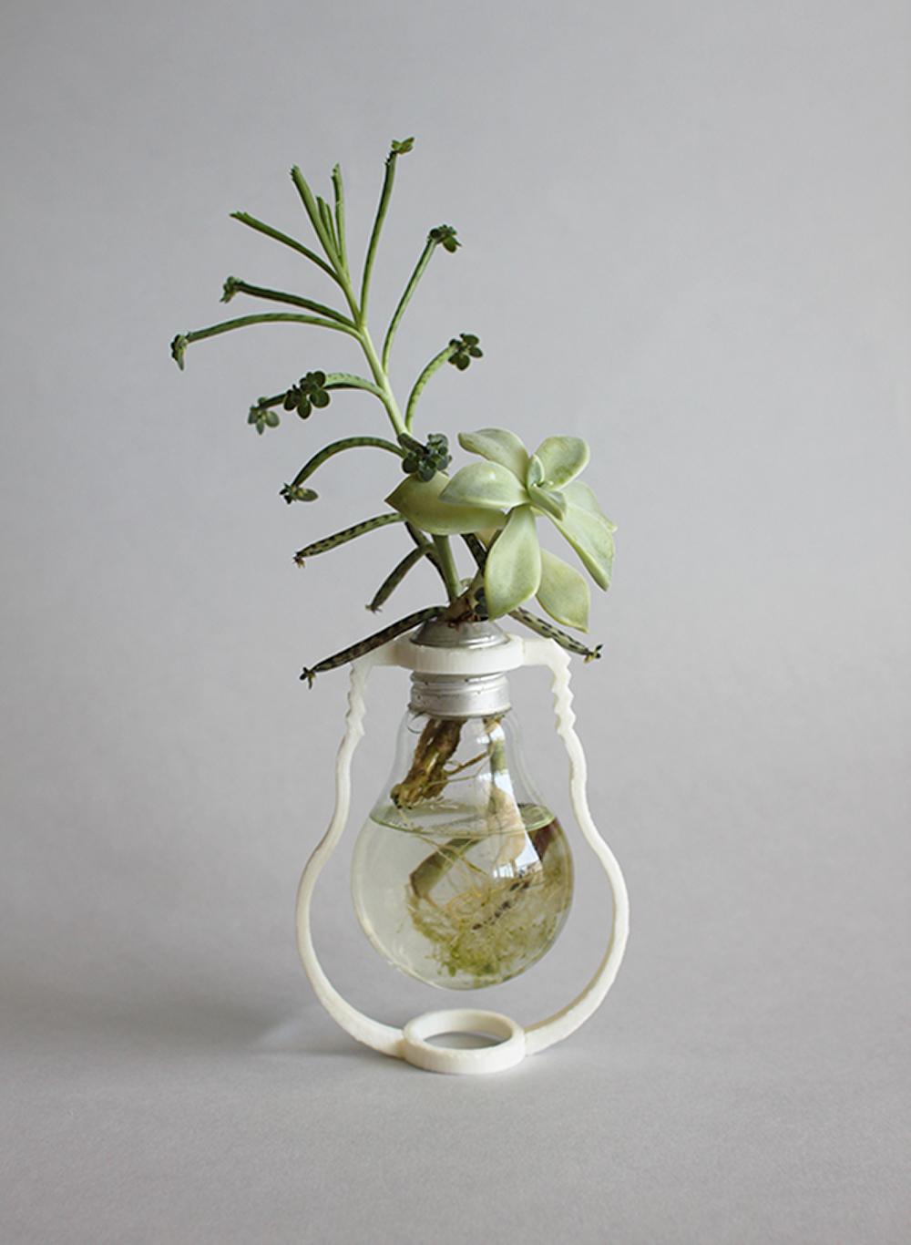 קרן סינגר העניקה חיים חדשים לנורה השרופה שהופכת לכלי קיבול לצמח כאקט של חיים שלאחר המוות