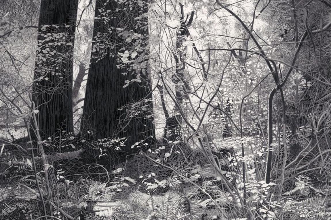 עופר רותם, זוכה פרס שיף 2015, יערות מואיר, תמונה ראשית