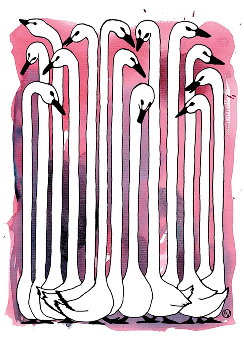 אווזים ארוכי צוואר