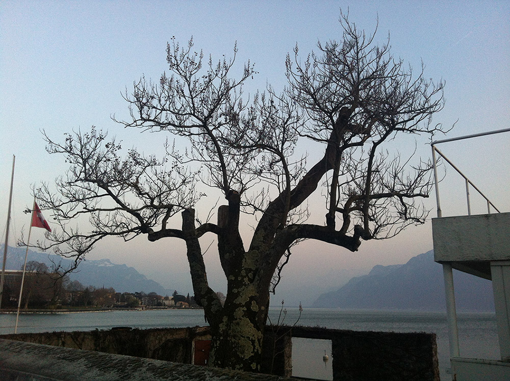העץ החולה