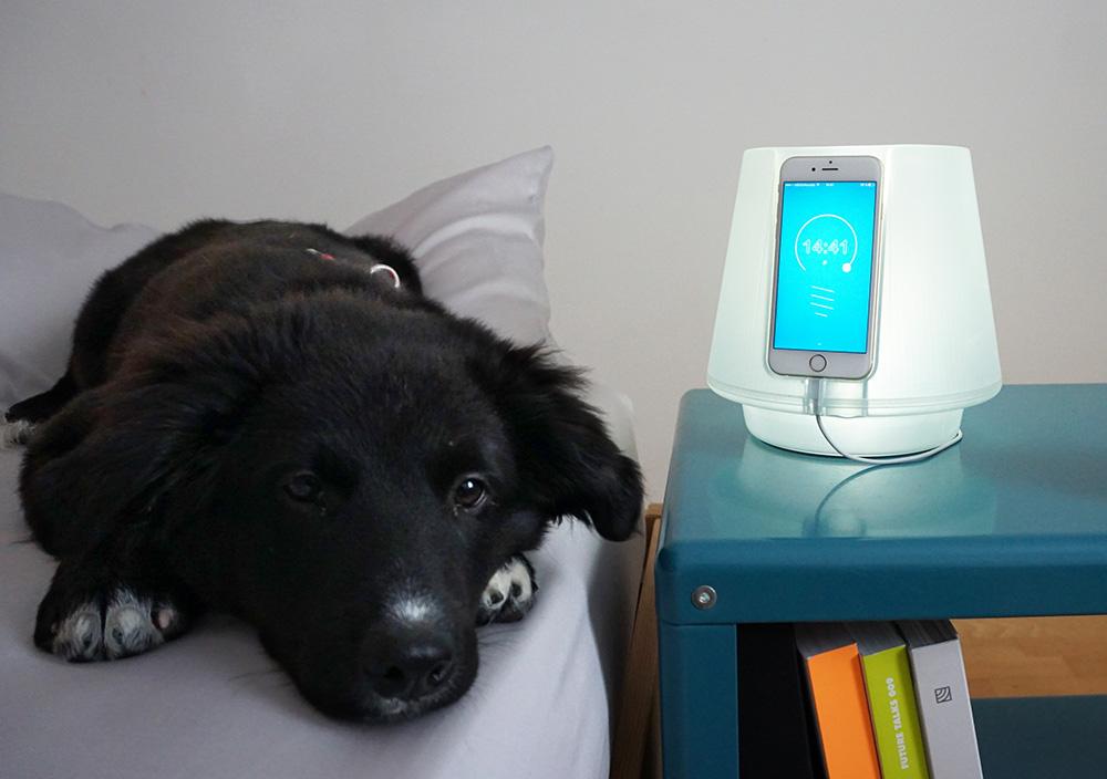 הסיפור של הכלב בשעת לילה. uplamp ולידה כלב שוכב על המיטה