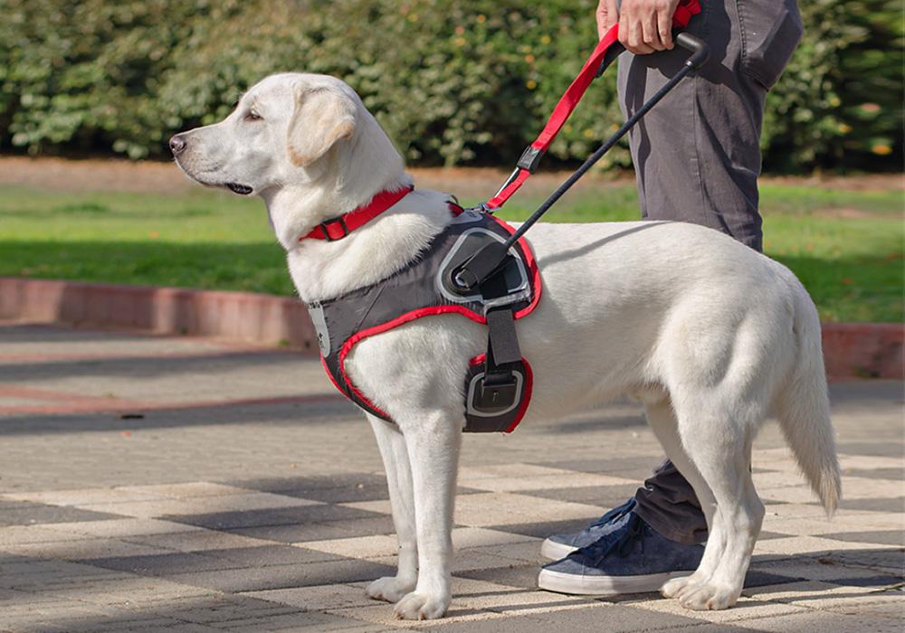 רתמת כלב נחייה לעיוור, אמיר רוזן. צילום: גיא בן עטר